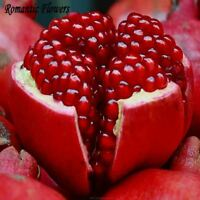 30 Particle/bag Giant Pomegranate Seed Home Plant Delicious Fruit Seeds Very Big