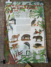 Smithsonian Tropical Research Institute Animals Poster Spanish Panama