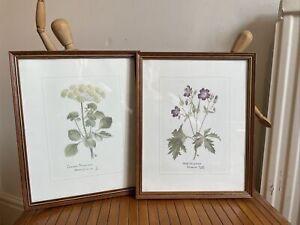 Vintage Glazed Framed  Botanical Print Pair -First Edition - Alice Cole