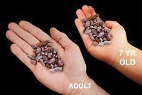 Ruby Corundum 2 Oz Bag AAA Grade Rock Mineral HeartChakra Healing Reiki Gemstone