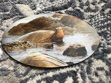 Sea Turtle Tortoise Magnet - Ocean - Natural Habitat Oval Flexible 3x5� New!