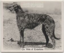 Scottish Deerhound 1930s Champion Dog Breed Canine Pet Ad Trade Card