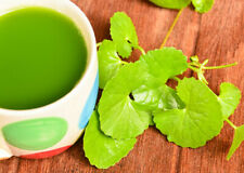 Pure Ceylon Organic Herbal Gotukola /Centella Asiatica Leaf Powder Sri Lanka-(10