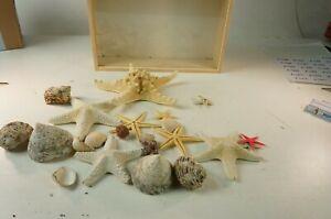 Schachtel mit Seestern Mineralien Fossilien Versteinerung Steine Konvolut A-1255