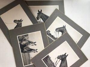 TEN ORIGINAL MOUNTED PHOTOS OF SADDLE & SHOW HORSES, MULES, ARABIAN