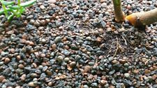 Bonsai Substrat 6 Liter Bonsaierde aus Fibotherm und Kokos Fasern
