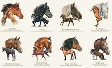 Razas De Caballos Equinos Panel de algodón acolchado Tela Elizabeth's Studio