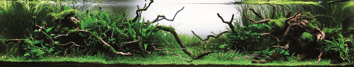 Charm of Aquarium