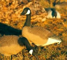 Canada Goose Field Decoys 6 Pack Geese Hunting Gun Full Size - Sentry - New
