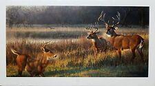"""Nancy Glazier """"Shadow Tales""""  White-tailed deer  LTD ED  S/N (588/1500)  COA"""