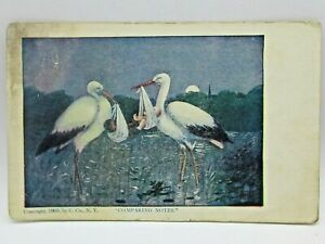 Postcard Storks Comparing Notes Black and White Babies Posted 1908