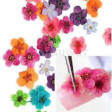 60pcs Dried Dry Flower Nail Art Tips Decor Manicure UV Gel Acrylic Wheel DIY