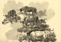 Eliza P. Mosley after George Morland, Cows – 1806 grisaille watercolour painting