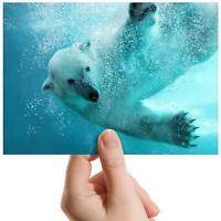 "Swimming Polar Bear Nature - Small Photograph 6"" x 4"" Art Print Photo Gift #8242"