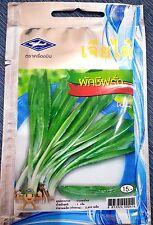 Culantro, Thai parsley 2800 vegetable seeds,plant, organic, tropical, Chia Tai