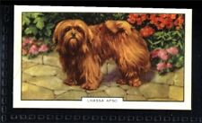 Gallaher Dogs 2nd Series 1938 - Lhassa Apso No. 41
