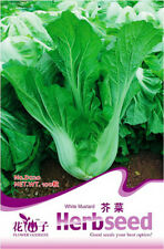 Original Packaging 100 Seeds Leaf Mustard Seeds Brassica Senvy Seeds D020