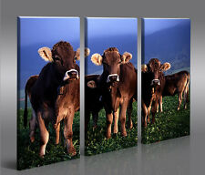 Kühe 3 Bilder Bild Foto Landschaft Tier Kuh auf Leinwand Wandbild Poster