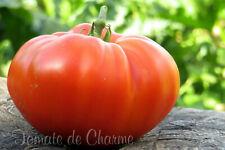 10 graines de tomate bio ancienne d'Ukraine KUUM super en apparence et rendement