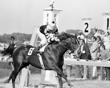 1977 Preakness Stakes SEATTLE SLEW Glossy 8x10 Photo Jean Cruguet Poster Print