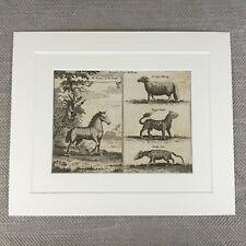 Rare Zoology Print 18th Century Engraving Nathaniel Parr Zebra Tiger Wolf