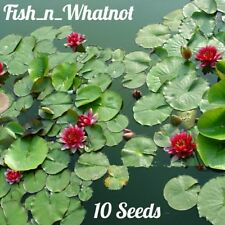 10pc. Lotus Water Lily Seeds Aquarium Pond Water Garden Goldfish Koi