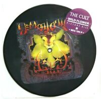 "NEW / MINT THE CULT WILD FLOWER  7"" VINYL PICTURE PIC DISC WILDFLOWER AC/DC"