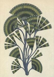LARGE SIZE FAN ALGAE POSTCARD - BOTANICUM KATIE SCOTT  Kew Royal Botanic Gardens