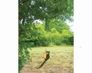 Songbird Essentials SQUNGEE FEEDER / BUNGEE JUMPER SQUIRREL ENTERTAINER      #dm