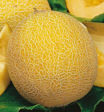 Melon Lesya Seeds organic seeds non gmo Ukraine 3 g Farmer's dream