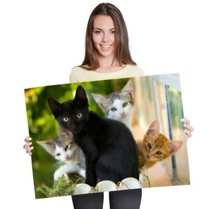 A1 - Cute Kittens Black Tabby Ginger Cat Poster 60X90cm180gsm Print #24573