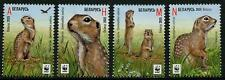 WWF Squirrels set of 4 stamps mnh 2015 Belarus