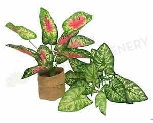 NEW Artificial Flowers/Plants SP0233 Caladium / Syngonium Plant 38cm 2 styles