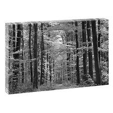 deko bilder drucke auf leinwand mit wald ebay. Black Bedroom Furniture Sets. Home Design Ideas