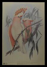 "John Gould Pink Cockatoo Bird Limited Edition Print 21"" x 14.5"""