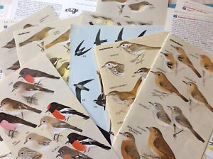 20 Bird Book Pages DIY Junk Journal Fussy Cut Paper craft Tags Ephemera Collage