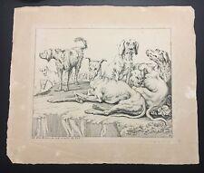 Johann Elias Ridinger Hound Dog Engraving C.1728 Plate No.8
