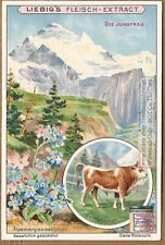 Monte Jungfrau Switzerland Alps c1903 Trade Ad Card