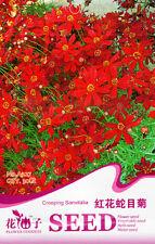 1 Pack 30 Red Creeping Sanvitalia Seeds Sanvitalia Procumbens Flowers A227