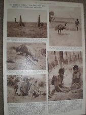 Photo article Australia the emu pet and prey of aborigines 1954
