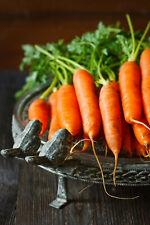 650+ Carrot Seeds (Danvers 126) - A Non-GMO Heirloom Vegetable