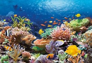 CSC101511 - Castorland Jigsaw 1000 pc - Coral Reef Fishes