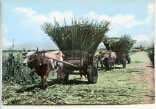 CP Ile de la Réunion - Charette de cannes à sucre