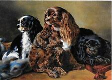 Chocolate Cavalier King Charles Spaniel small blank note card