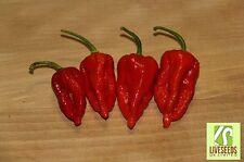 Liveseeds - Chili / Chilli Pepper - Bih Jolokia - 10 Seeds - Exceptional Heat