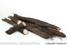 Schwarzwurzel Similar like Spargel Delikatessgemüse 20 Fresh Seeds Balcony