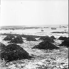 LOCTUDY c. 1950 - Bateaux Tas de Goémon Finistère - Négatif 6 x 6 - N6 BR9