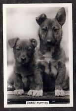 1939 Uk Dog Photograph Senior Service Cigarette Card Pembroke Welsh Corgi Puppy