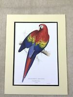 Antique Parrot Print Macaw Parrots Red and Yellow Gold Rare Exotic Birds