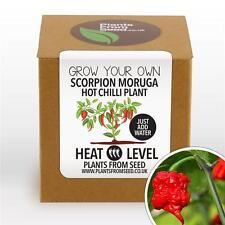 Piante da seme-Crescere Il Tuo Scorpion Moruga Peperoncino Pianta Kit